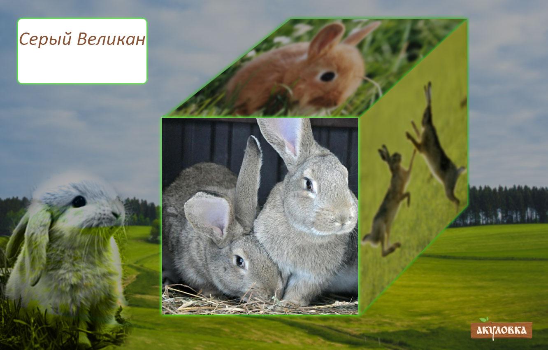 Кролик обр