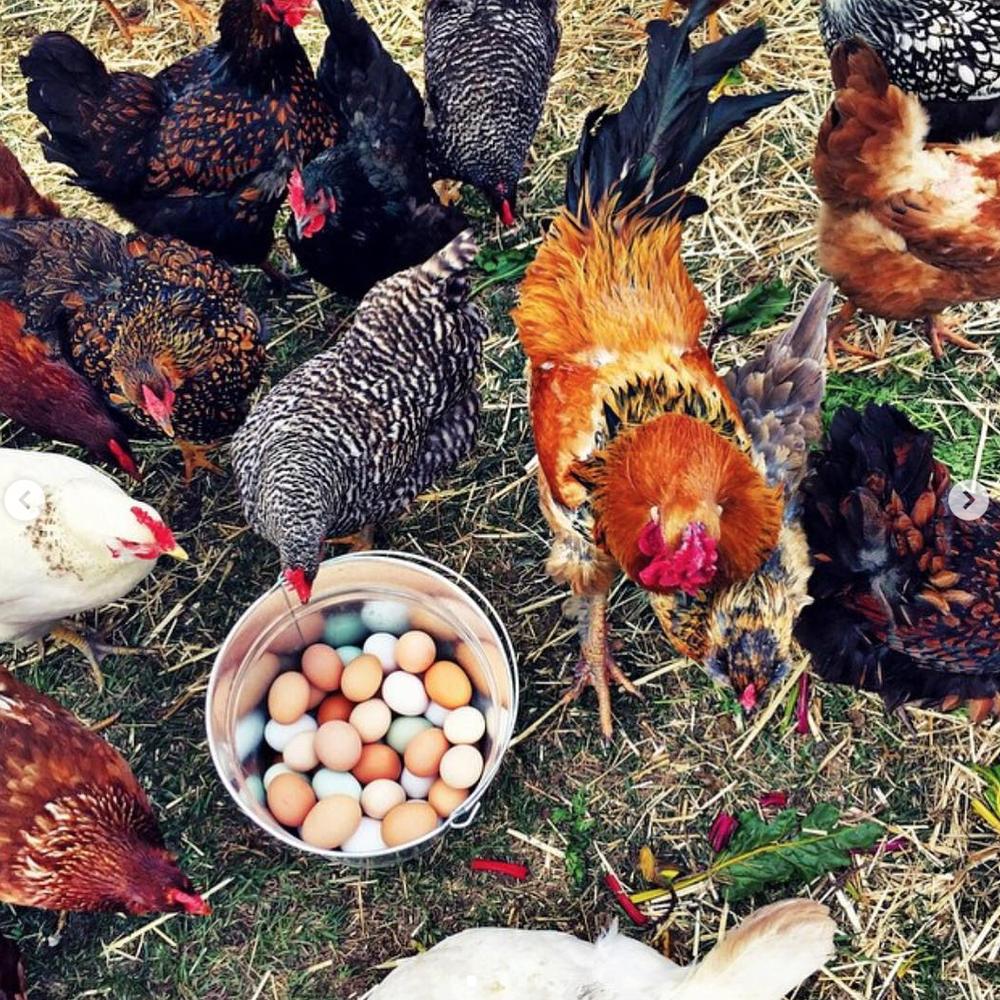 что такое куриные яйца